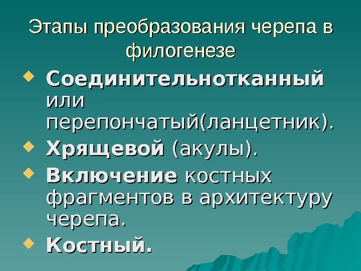 Череп Хрящевой