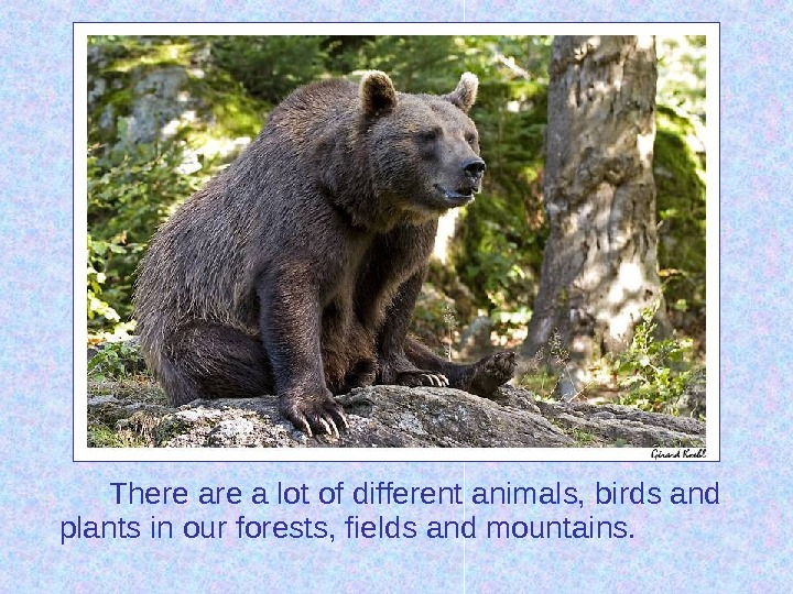 There a lot of different animals, birds and plants in our forests, fields and