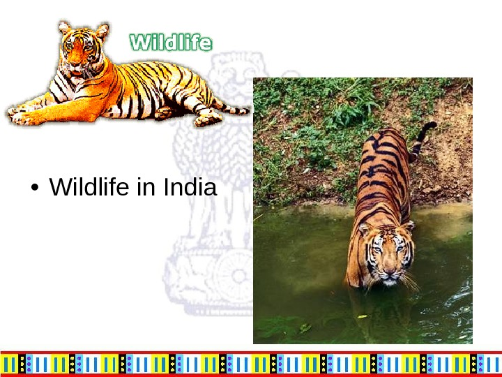 • Wildlife in India