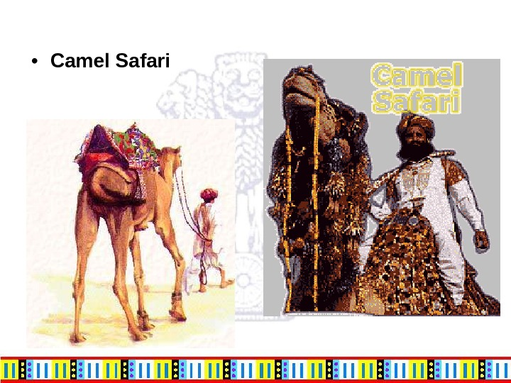 • Camel Safari