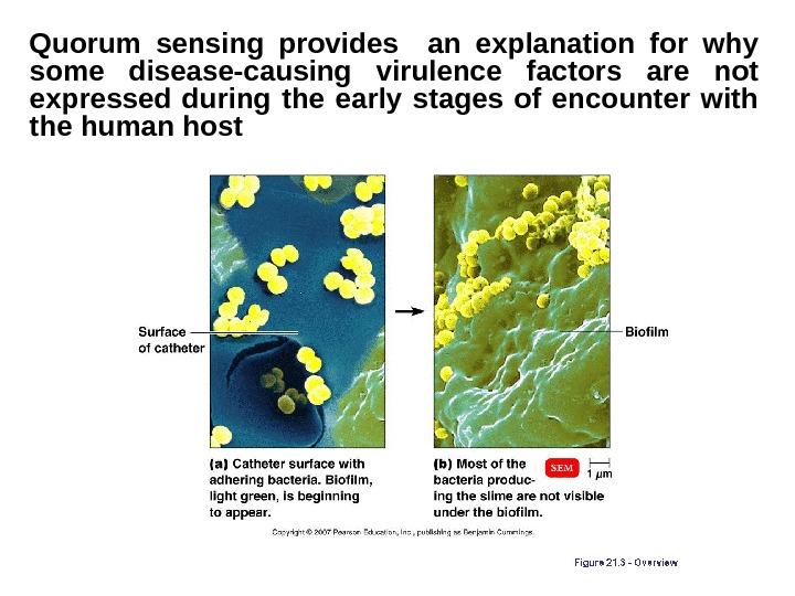 Quorum sensing provides  an explanation for why some disease-causing virulence factors are not