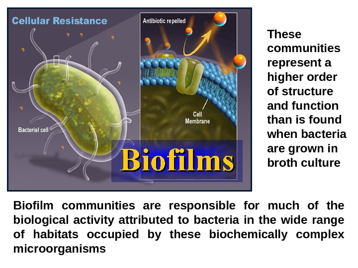 Living bacteria Biofilm communities are responsible for much of the biological activity attributed to