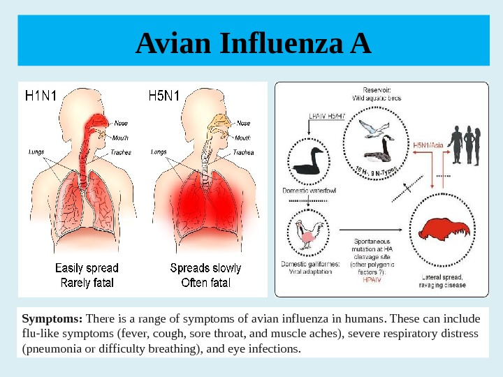 Avian Influenza A Symptoms: Thereisarangeofsymptomsofavianinfluenzainhumans. Thesecaninclude flu-likesymptoms(fever, cough, sorethroat, andmuscleaches), severerespiratorydistress (pneumoniaordifficultybreathing), andeyeinfections.