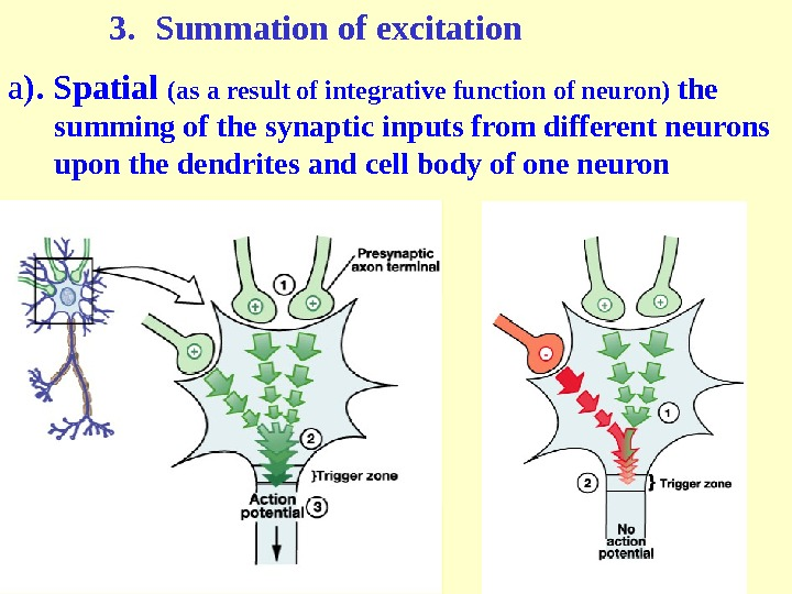 3. Summation of excitation а ).  Spatial  (as a result of integrative function of