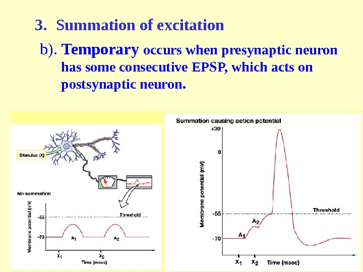 3. Summation of excitation b ).  Temporary occurs when presynaptic neuron has some consecutive EPSP,