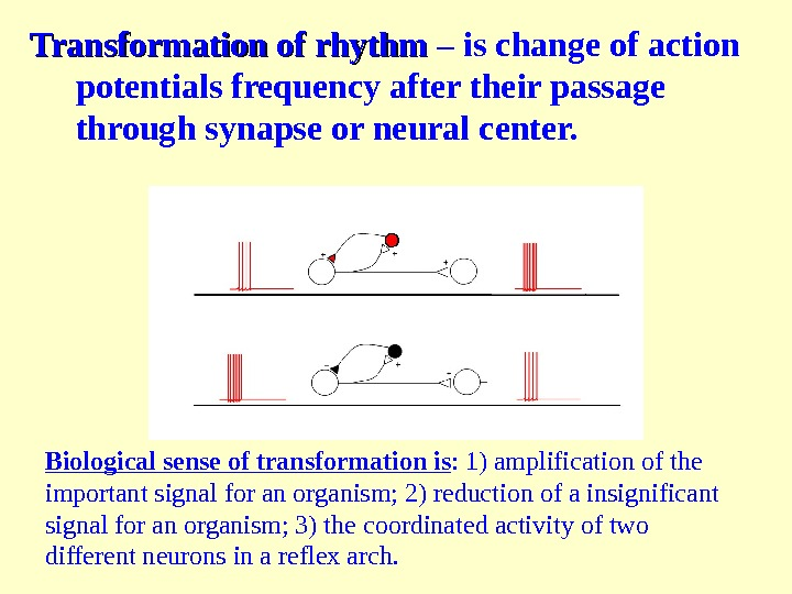 Transformation of rhythm – is change of action potentials frequency after their passage through synapse or