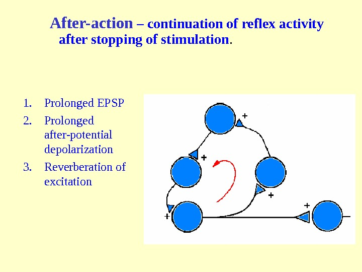 After-action  – continuation of reflex activity after stopping of stimulation. 1. Prolonged EPSP 2. Prolonged