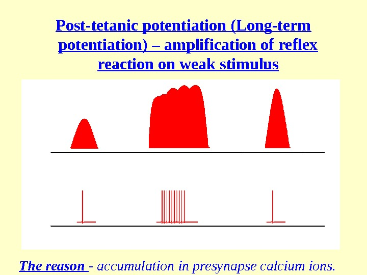 Post-tetanic potentiation (Long-term potentiation) – amplification of reflex reaction on weak stimulus The reason - accumulation