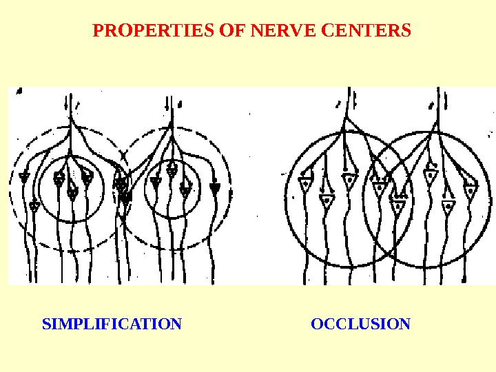 PROPERTIES OF NERVE CENTERS SIMPLIFICATION OCCLUSION