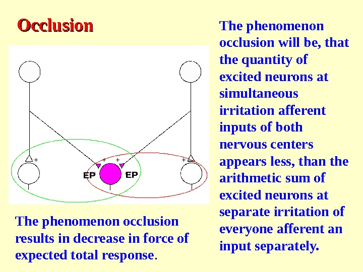 OO cclusion The phenomenon occlusion will be, that the quantity of excited neurons at