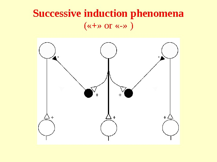 Successive induction phenomena ( «+»  or  «-» )