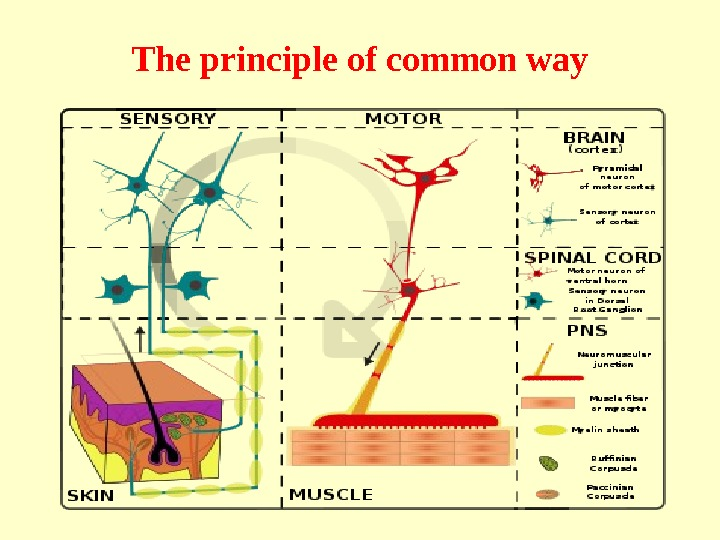The principle of common way