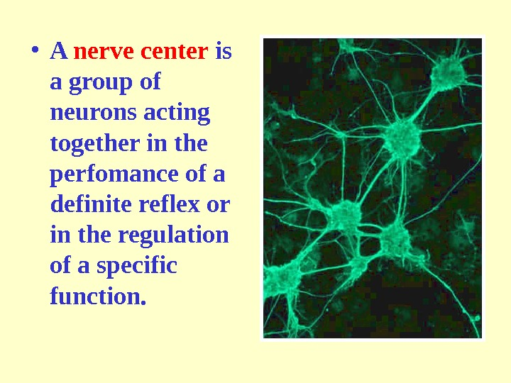 • A nerve center is a group of neurons acting together in the perfomance of