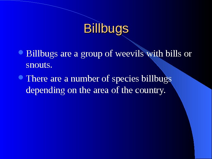 Billbugs are a group of weevils with bills or snouts.  There a number of species