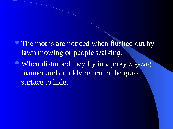 The moths are noticed when flushed out by lawn mowing or people walking.  When