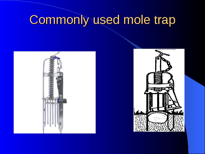 Commonly used mole trap