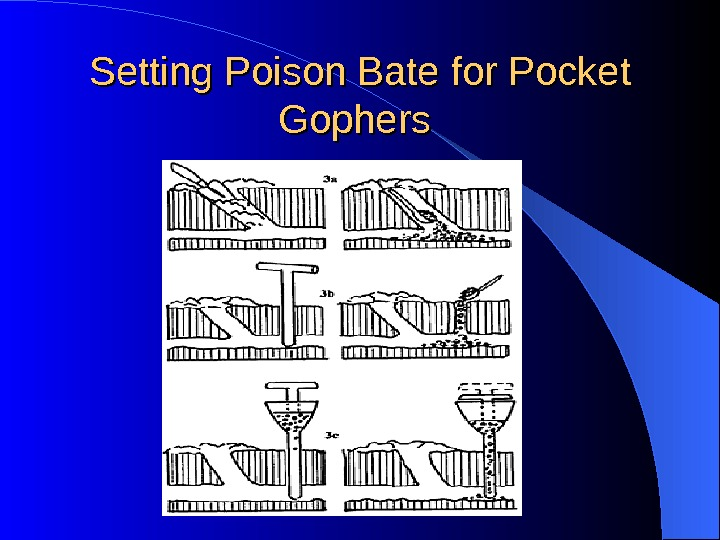 Setting Poison Bate for Pocket Gophers