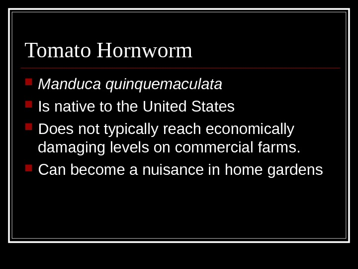 Tomato Hornworm Manduca quinquemaculata Is native to the United States Does not typically reach economically damaging