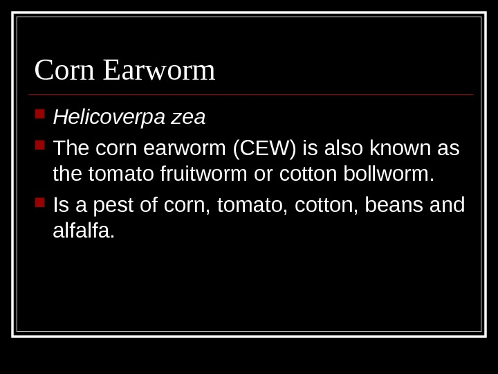 Corn Earworm Helicoverpa zea The corn earworm (CEW) is also known as the tomato fruitworm or