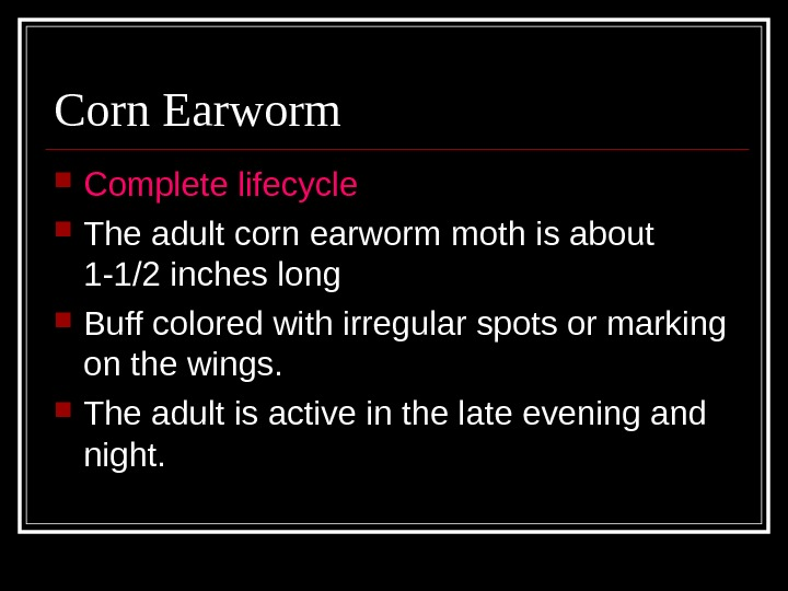 Corn Earworm Complete lifecycle The adult corn earworm moth is about 1 -1/2 inches long Buff