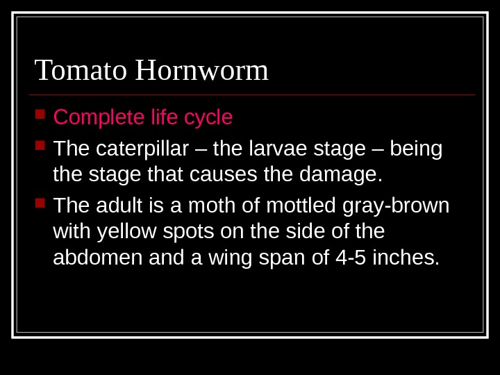 Tomato Hornworm Complete life cycle  The caterpillar – the larvae stage – being the stage