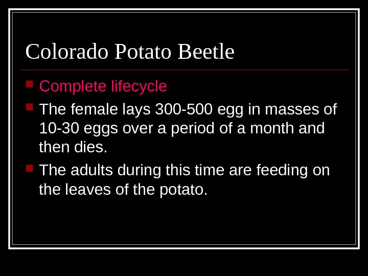 Colorado Potato Beetle Complete lifecycle The female lays 300 -500 egg in masses of 10 -30