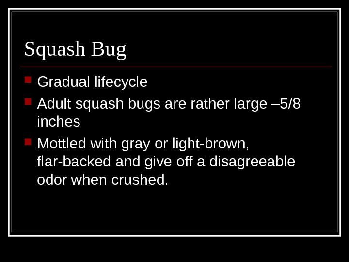 Squash Bug Gradual lifecycle Adult squash bugs are rather large – 5/8 inches Mottled with gray