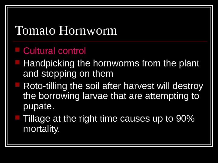 Tomato Hornworm Cultural control Handpicking the hornworms from the plant and stepping on them Roto-tilling the