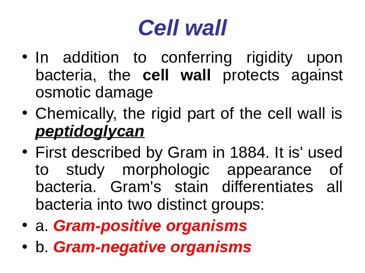 Cell wall • In addition to conferring rigidity upon bacteria,  the cell wall