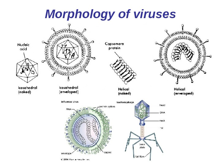 Morphology of viruses
