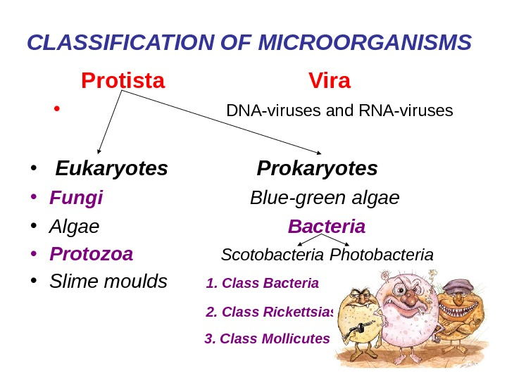 CLASSIFICATION OF MICROORGANISMS  Protista    Vira •
