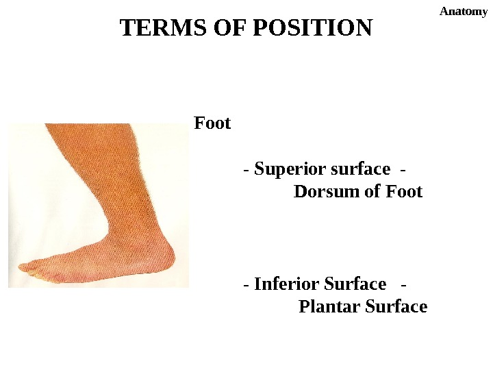 TERMS OF POSITION Anatomy Foot - Superior surface -     Dorsum of Foot
