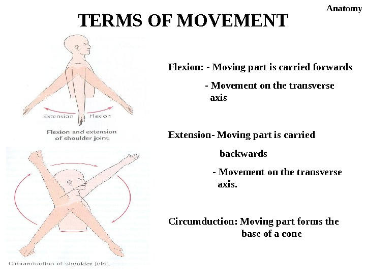 Flexion: - Moving part is carried forwards - Movement on the transverse  axis Extension- Moving