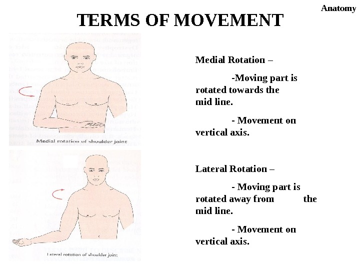 Medial Rotation – -Moving part is rotated towards the mid line. - Movement on vertical axis.