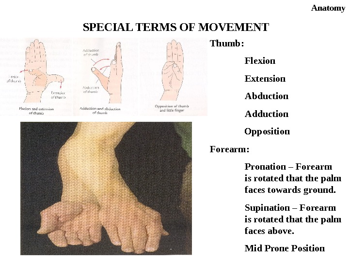 Anatomy SPECIAL TERMS OF MOVEMENT Thumb: Flexion   Extension Abduction Adduction    Opposition