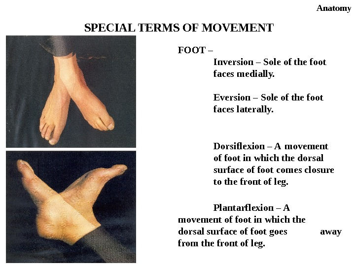 Anatomy SPECIAL TERMS OF MOVEMENT FOOT – Inversion – Sole of the foot faces medially. Eversion