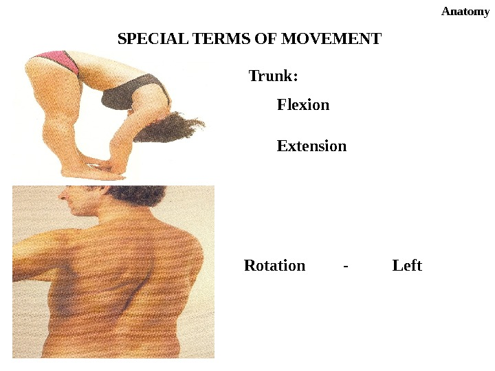 Anatomy SPECIAL TERMS OF MOVEMENT Trunk: Extension. Flexion Rotation - Left
