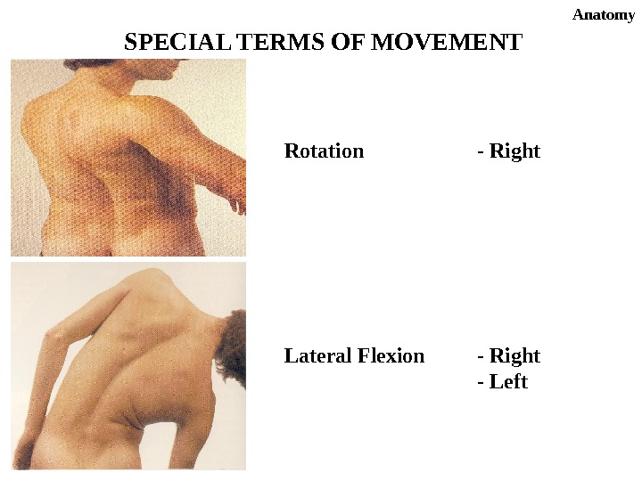 Anatomy Rotation - Right Lateral Flexion - Right - Left. SPECIAL TERMS OF MOVEMENT