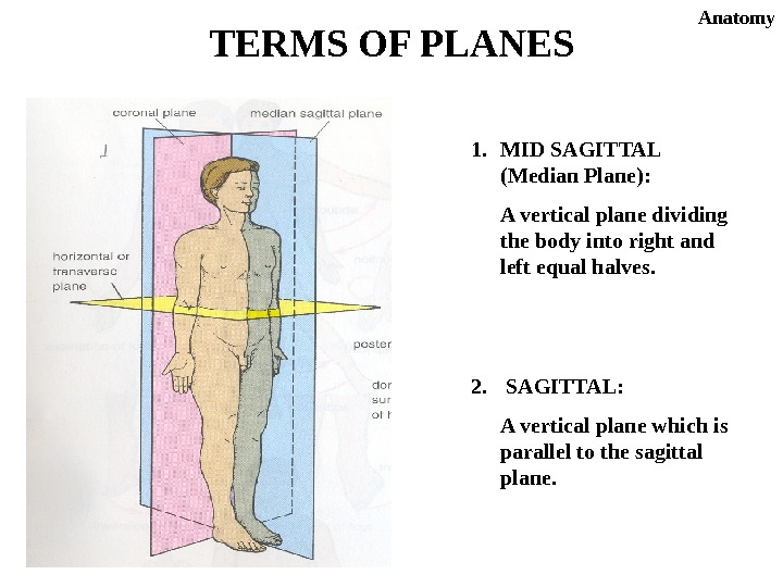 1. MID SAGITTAL (Median Plane): A vertical plane dividing the body into right and left equal