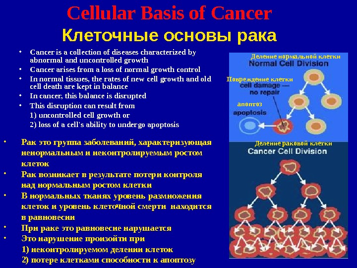 2 Cellular Basis of Cancer  Клеточные основы рака • Cancer is a collection of