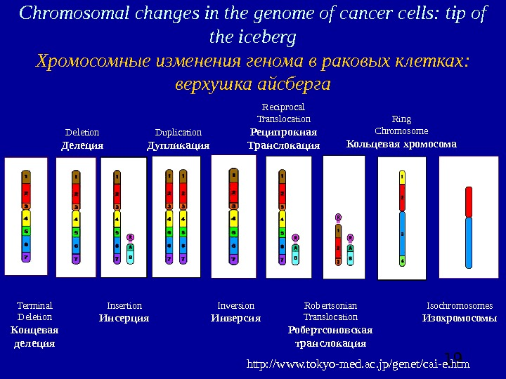 19 Chromosomal changes in the genome of cancer cells: tip of the iceberg Хромосомные изменения
