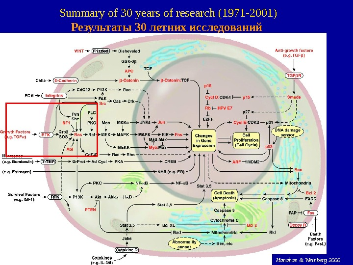 58 Hanahan & Weinberg 2000 Summary of 30 years of research (1971 -2001) Результаты 30