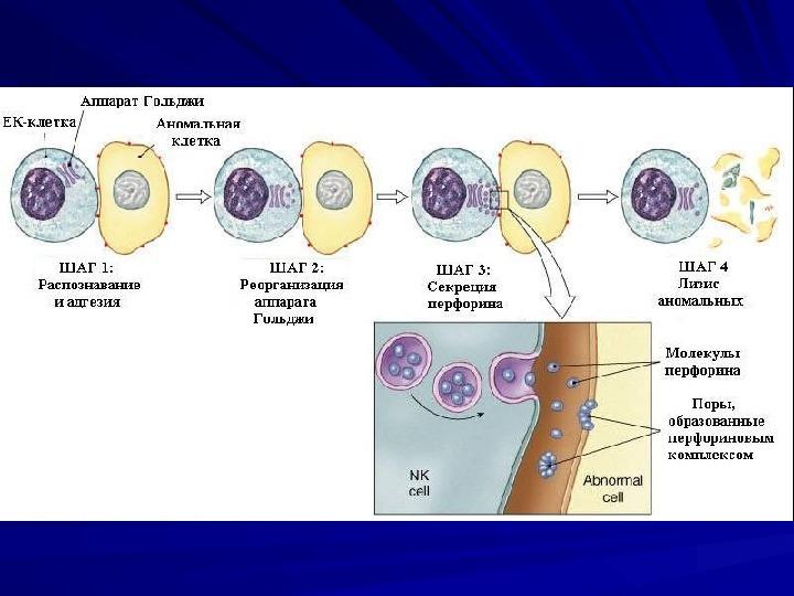 Клетка-Мишень