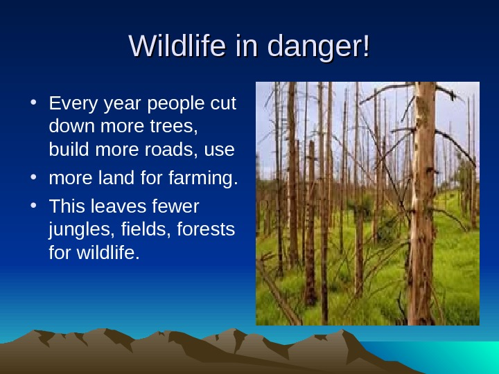 Wildlife in danger! • Every year people cut down more trees,  build more roads, use