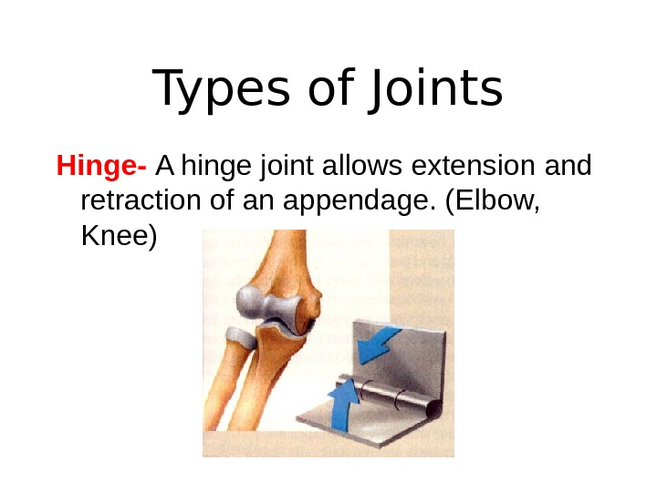 Types of Joints Hinge-  A hinge joint allows extension and retraction of an appendage. (Elbow,