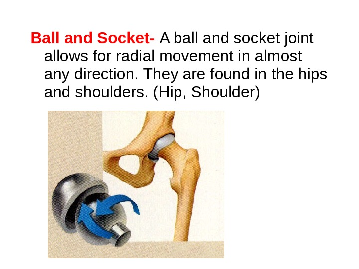 Ball and Socket-  A ball and socket joint allows for radial movement in almost any