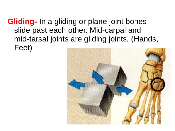 Gliding-  In a gliding or plane joint bones slide past each other. Mid-carpal and mid-tarsal
