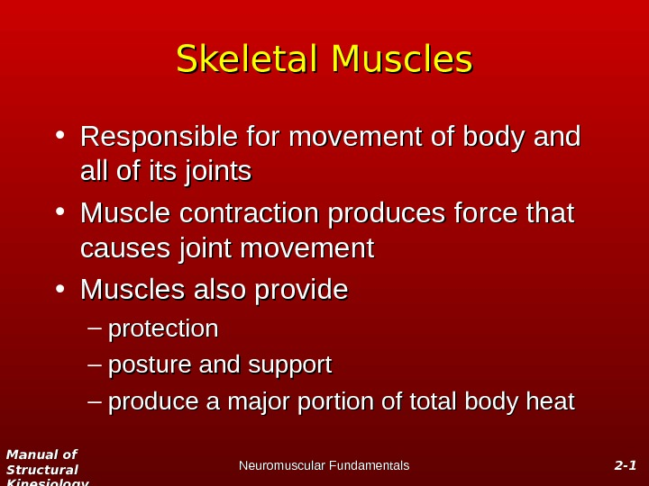 Manual of Structural Kinesiology Neuromuscular Fundamentals 2 -2 - 11 Skeletal Muscles • Responsible for movement