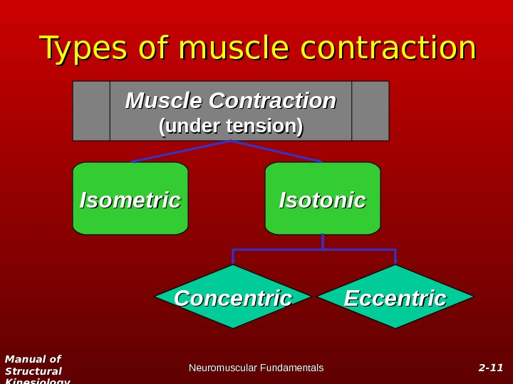 Manual of Structural Kinesiology Neuromuscular Fundamentals 2 -2 - 1111 Types of muscle contraction Muscle Contraction