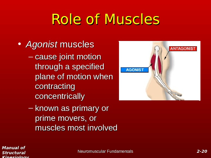 Manual of Structural Kinesiology Neuromuscular Fundamentals 2 -2 - 2020 Role of Muscles • Agonist muscles